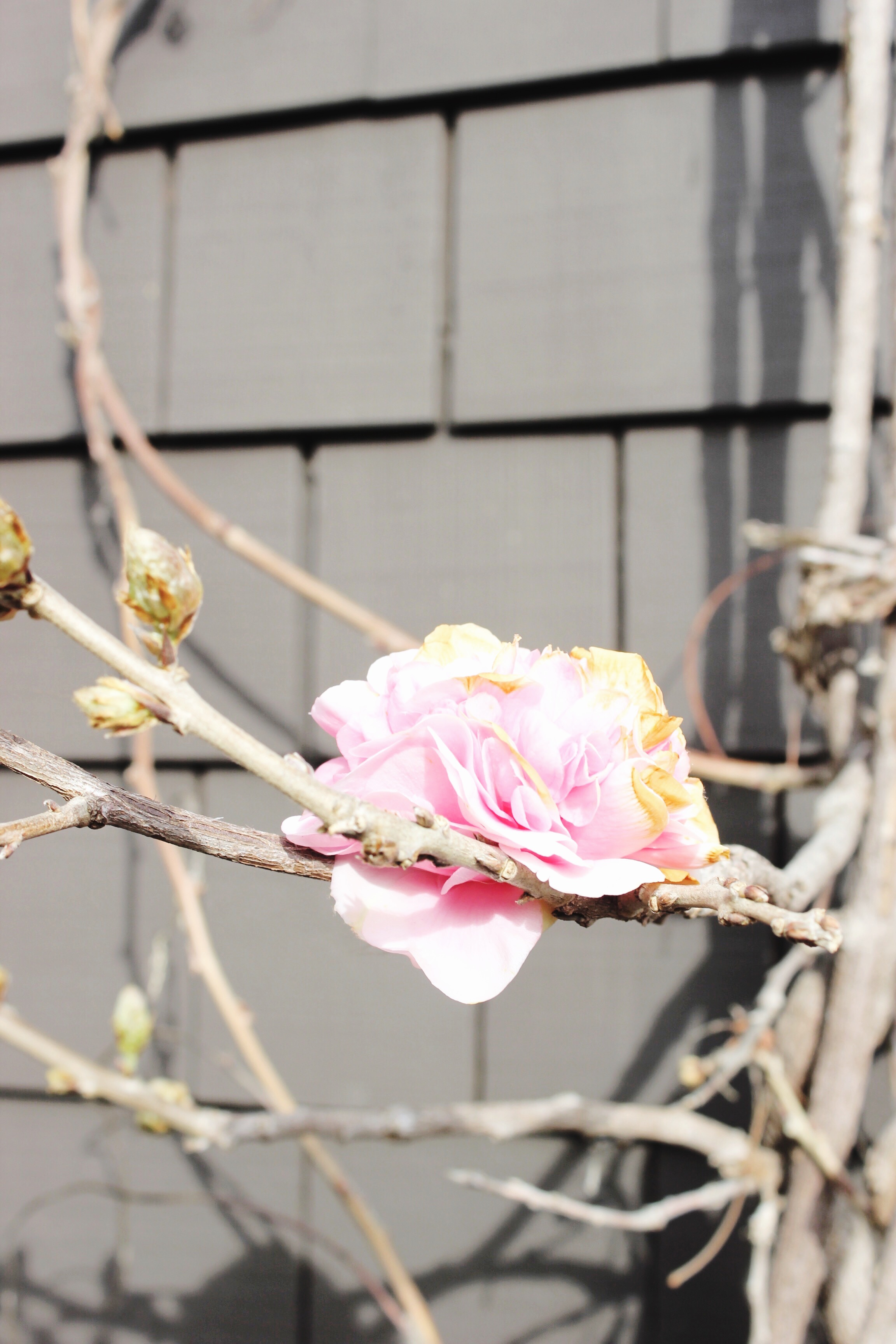 Pink Flower / Modern Daydream Living